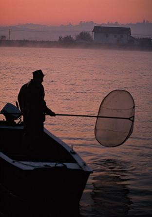 Pesca de angula con red