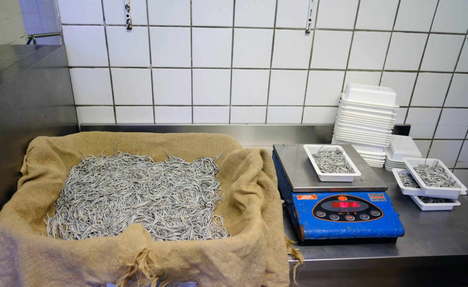 Preparación de las barquetas de angula para su distribución