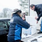 1,5 millones de angulas para la repoblación en Friesland