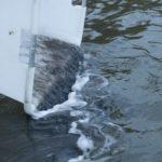 Más de 9T de angulas echadas al agua